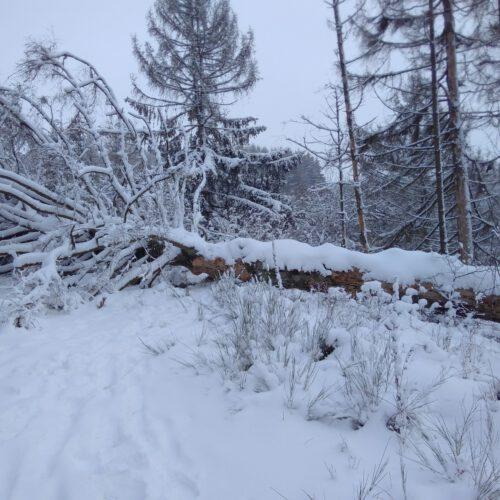 Winterbruch